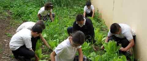 Imagen-Video: Escolares nicaraguenses cultivan alimentos para merienda escolar