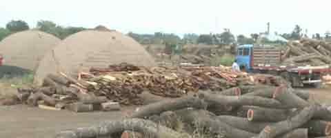 imagen-Video: Desmonte en las tierras indigenas de Argentina, catastrofe ambiental en aumento