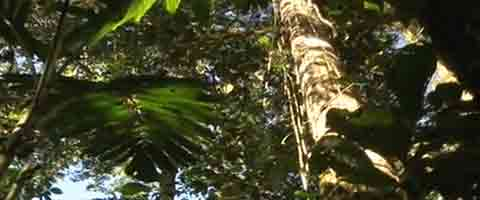 Imagen-Video: Acceso publico al documental Alerta Amazonica