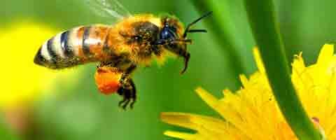Imagen-Santiago de Chile se repuebla de abejas gracias a Plan Bee