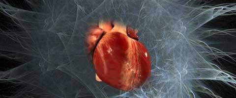 Imagen-El corazon tiene un cerebro independiente con comunicacion neurologica