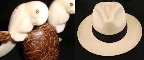 Imagen-Tagua y paja toquilla: Especies emblematicas de la flora ecuatoriana