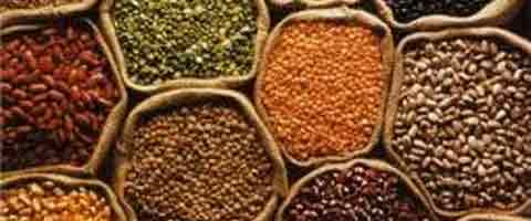 Imagen-Cientificos logran alargar el tiempo de vida de las semillas