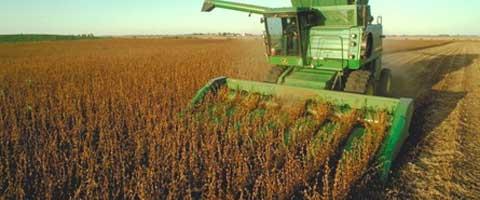 Imagen-La soya trangenica de Monsanto es peor de lo que imaginabamos