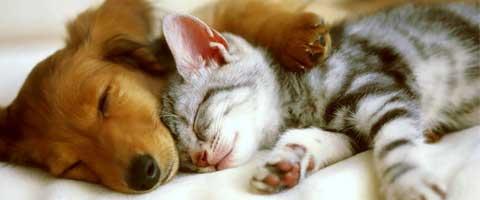 Imagen-Video: ¿Sueñan los animales?