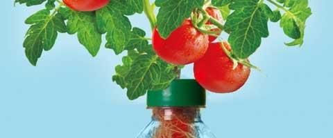 Imagen-Petomato, la taparrosca que transforma botellas en jardines hidroponicos