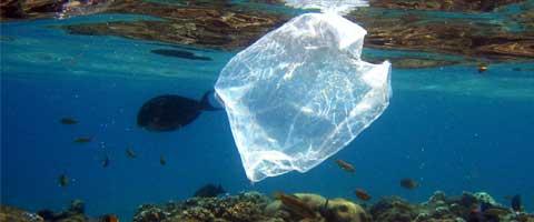 Imagen-Los desechos plasticos en el oceano forman un nuevo tipo de roca